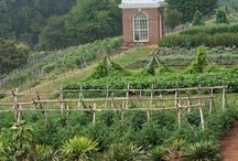 garden / by Jay Findley