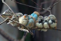Birds / by Lisa (harris) Palazzolo