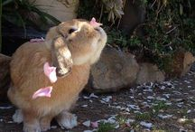 zajaciky