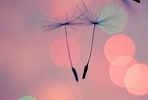 Just Dandy / by Lorena Skipper