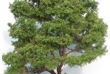 Tree, Grass, Bush