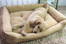Pet Supply Haustiere Tierbedarf