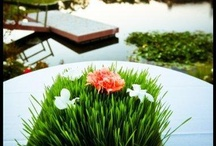 Event Decor / Kitty grass can be used for your next event for centerpieces, bouquets, etc. to make your special day that much prettier.