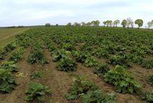 Branża rolna