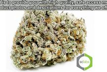 Best Monterey county medical marijuana / Read about Best Monterey county medical marijuana for a good user experience with us. Here you will get the latest updates about the medical marijuana.