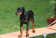 Favourite Dogs / Mein Hund