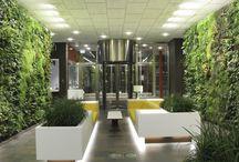 ( Gardening space , streets, offices , streets , facades , shopping centers , mail) Озеленение  пространства , улиц, офисов , холов , фасадов , торговых центров