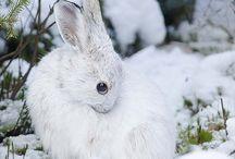 Bunnies - just bunnies ^^