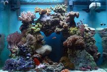 Reeftank