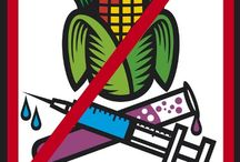 Dr. Oz/ GMO
