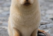Another cute little animals