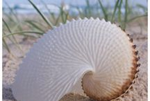 amazing shells / by Victoria M
