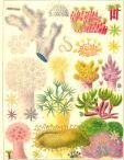 Antiquarian plates of the Great Barrier Reef / Lovely old plates of fish, corals and anemones etc, circa 1900, unsigned.