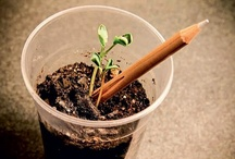 Ideias sustentáveis