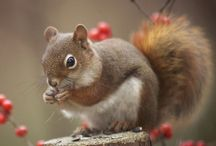 Squirrels in the world / Squirrels are more friendly and cute animals in the world. They are beautiful and deserve to be loved and adored