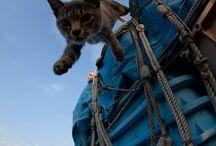 Katzen &  co
