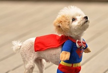 Animal are Heroes