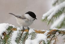 winter / by Cynthia McAtee