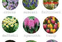 Garden sweet garden / flowers.. soul... plants..