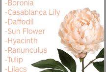 AW/ Wedding flowers seasons