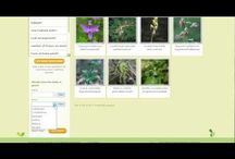 New England Wild Flower Society