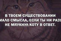 Цытаты про котиков