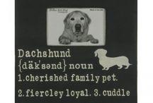 Buster, the daschund / by Helen Gabbard