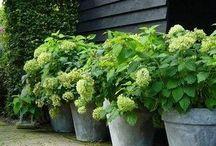 Yard/kitchen garden--container / by MS Bradshaw