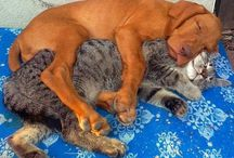 Animales Abrazándolos