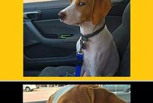 funny dog/cat