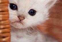 Cute Animals! / Such cute animals... Must resist...