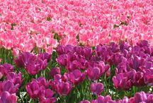 Doğal ve Tasarım Çiçekler, Bitkiler