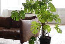 Växter - inne