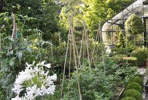 House-garden/potager