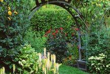 My secret garden / by Maria Levy