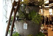 Mini Gardens, Containers, Pots / container gardening, small space and little gardens / by Patsy Bell Hobson