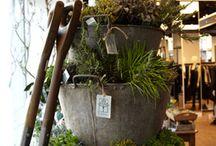 Home: Garden/Yard Landscape