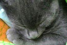 our kitty DUMAN