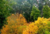 South Australia ** / by Denise Newlyn