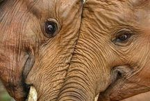 I love love love elephants! !