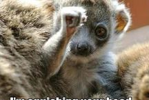 pikku apinanpentu nyrkki pystyssä