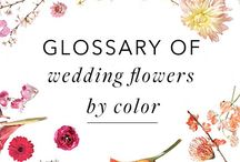 A Glossary of Flowers by Color