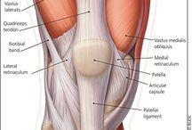 Knee And Chronic Knee Pain