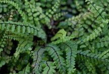 plantes ext