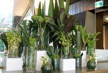 Plantas e verde