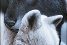 animaux & animals