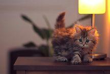 Cats - Γατούλια / Μεγάλη αγάπη...  I'm just a cat and I say Meow!