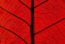 leaf / by Robert Gamby