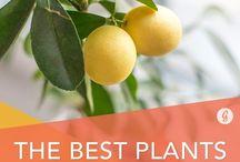 Plante - Plants
