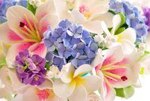 F / Flower
